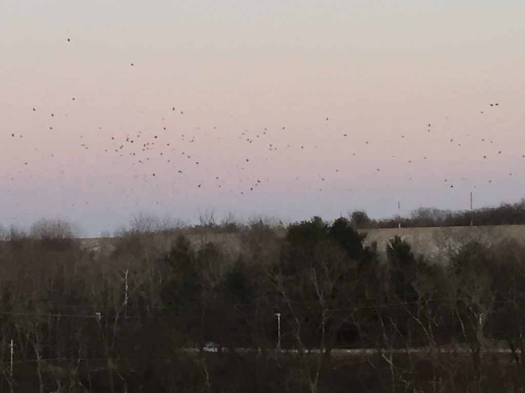 Crows Over the Merrimack River
